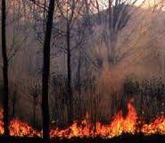В пожаре на лесозаготовительном участке пострадал один амурчанин