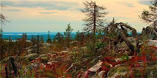 Достопримечательности Амурской области могут стать «Чудом России»