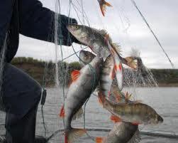 Во время запрета на рыбалку было выявлено более сорока нарушений