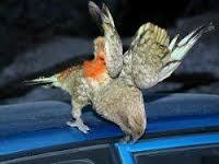 Китайцы пытались провезти попугаев в карманах