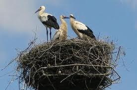 Гнездо для аиста
