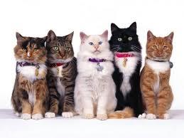 Московский специалист по кошкам приедет в Благовещенск