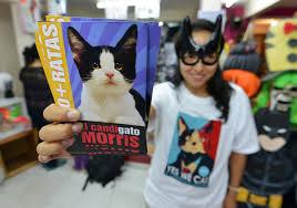 В Мексике город может возглавить кот