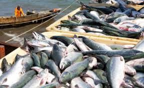 Планируется ужесточить контроль за дальневосточной рыбой
