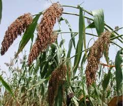 К 2020 году планируется увеличить объёмы производства сельхозпродукции