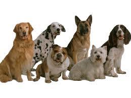 В Благовещенске прошли собачьи выставки