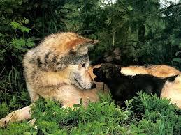 Ученые узнали, что предками собак не являются волки
