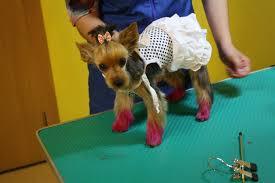 В Благовещенске стало модно окрашивать и выбривать собак