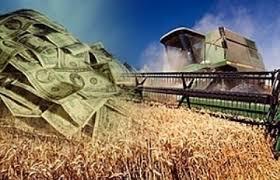 В Амурской области может быть сокращены финансовая поддержка агропромышленного комплекса