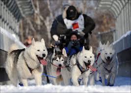 Собачьи гонки