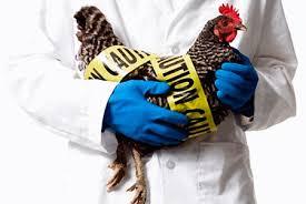В Китае арестовали жителей, которые распространяли информацию об эпидемии птичьего гриппа