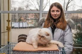 Благовещенские владельцы кошек готовят питомцев к выставке