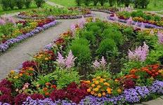 Благовещенские клумбы планируется заполнить цветами
