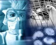 В Японии зафиксирована вспышка птичьего гриппа