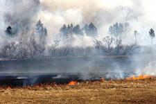 Владельцы земельных участков, которые допустили возгорание, будут наказаны
