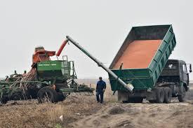 Амурские аграрии получат средства на восстановление почвы после наводнения