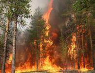 Гринпис заявляет, что власти Приамурья скрыли информацию о крупном лесном пожаре
