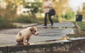 В благовещенском Городском парке состоялась ярмарка домашних животных