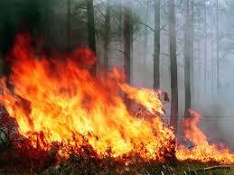 В Амурской области скрывают площади пожаров