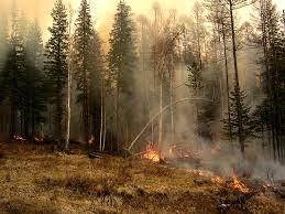 В Приамурье высаживают лес