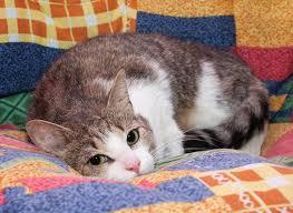 Благовещенские волонтёры оказали помощь кошкам
