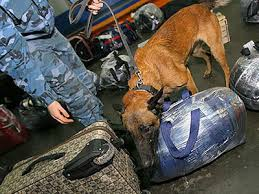 Служебные собаки Благовещенской таможни продемонстрировали умение в поисках наркотиков