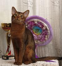 Об абиссинской кошке