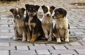 Благовещенцы искали новых владельцев для бездомных животных
