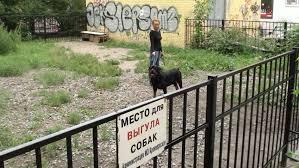 Закон обяжет выгуливать собак только на специальных площадках с ограждениями