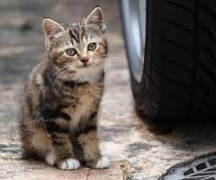 Акции  «Мартовская кошка» и «Мартовский кот» в Благовещенске