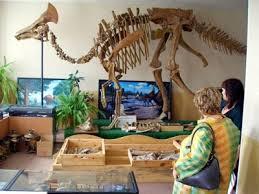 Амурский палеонтологический музей принимает участие в конкурсе