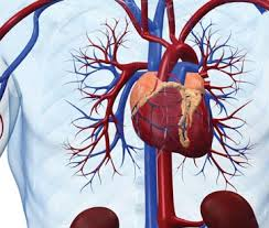 Одна из главных забот современной медицины – болезни сердечно-сосудистой системы