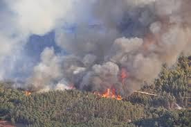 Пожары ликвидированы в Сковородинском районе