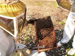 Кочевое пчеловодство в Приамурье