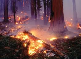 В Свободненском районе ликвидированы все пожары