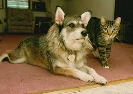 Благовещенцы спасают больных собак