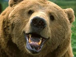 Медведь на тындинских дачах