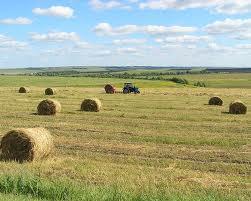 Губернатор проконтролировал процесс заготовки кормов