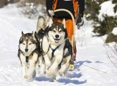 Жители области вместе со своими собаками отметили Масленицу