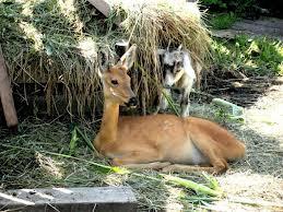 Животные под опекой