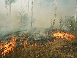 Постановление о начале сезонного пожароопасного периода