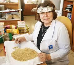 Из-за высокой влажности в Приамурье разводятся вредители в крупах