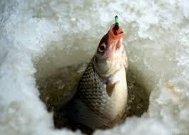 Благовещенские рыбаки вышли на лед