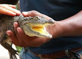 В аэропорту обнаружили крокодила