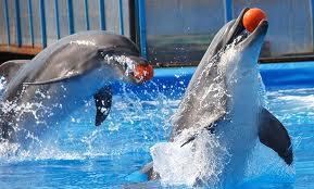 Школьники из Гродекова получили в подарок билеты в дельфинарий
