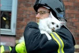 В Башкирии жизнь при пожаре спасла хозяину кошка