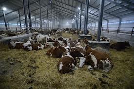 На восстановление сельского хозяйства Приамурья потребуется как минимум два года