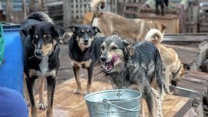 Бездомных собак в Благовещенске предлагается усыплять