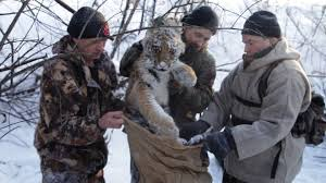 Операция по спасению тигра