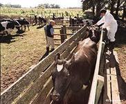 Амурские фермеры испытывают трудности со сбытом продукции